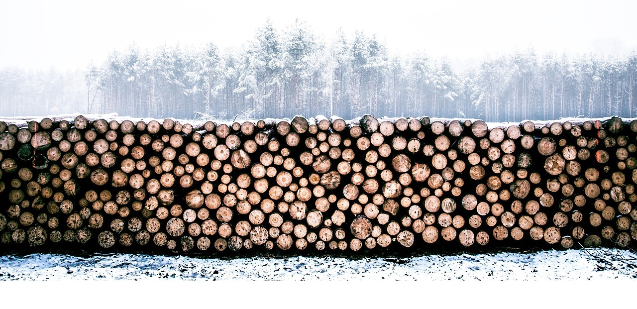 Lumber in the Snow
