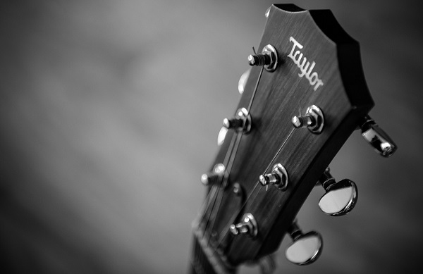 Taylor Acoustic Guitar Headstock Photo for Beginner Guitar Post